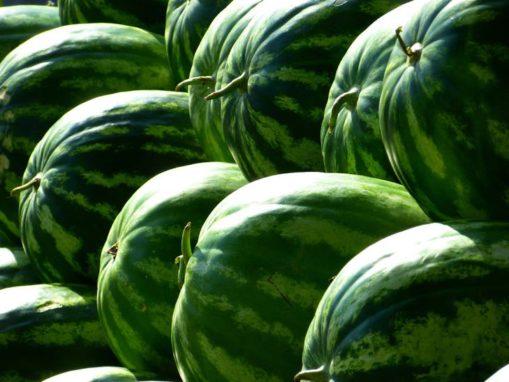 Meloun afrodiziakum přírodní viagra